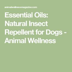Essential Oils: Natural Insect Repellent for Dogs - Animal Wellness