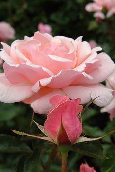 cd2ad833e4c1 32 Best Rose Garden images