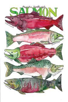 Pacific Northwest Salmon Watercolor