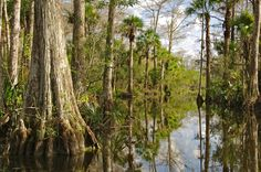 The Everglades, Florida, contain the largest mangrove ecosystem on this continent, but the specter of industrial development looms over this World Heritage site, UNESCO says.
