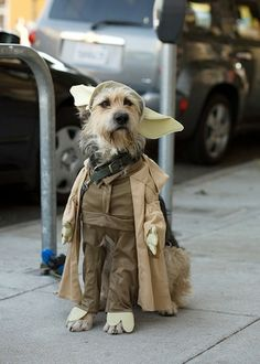 Yoda Dog Costume -- a new variation!