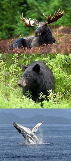 Die Tierwelt Kanadas - das muss man gesehen haben! #kanada #urlaub #roadtrip #tierwelt #camper #camping #campingtrip #campandanewsblog