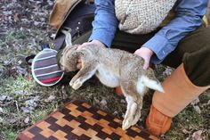 How to field dress and butcher a rabbit. A photo guide by Creek Stewart.