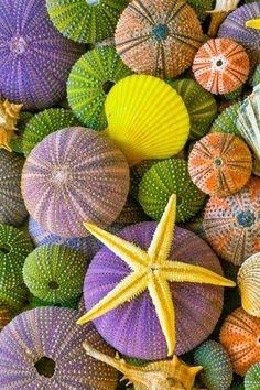 """Sea Rainbow"" by Panagiotis Kouvedakis Bubbles Wallpaper, Wallpaper Backgrounds, Wallpapers, Cellphone Wallpaper, Iphone Wallpaper, Zen Wallpaper, Seashell Art, Starfish, Beach Rocks"