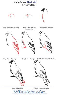 how to draw realistic birds step by step - Google Search