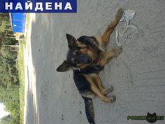 Найдена собака чья потеря???? г.Пермь http://poiskzoo.ru/board/read26625.html  POISKZOO.RU/26625 Вот такая девочка прибилась к стае бездомышей. Сама ласковая, дается гладить, умненькая. Искала среди объявлений о пропаже, не нашла. Может кто узнает? Может кто ищет? Пишите lidaskryabina@gmail. com, звоните, скажу адрес. Прошу, поделитесь, пожалуйста информацией. А вдруг спасем ребенка?   РЕПОСТ! @POISKZOO2 #POISKZOO.RU #Найдена #собака #Найдена_собака #НайденаСобака #Пермь