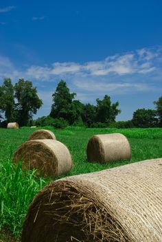 A daytime landscape photograph of rolled hay scattered about in a field. Photograph was taken at Mount Harmon Plantation in Earlville Maryland. Title: Hay Whatcha doin in the Field Photographer: Melissa Fague Genre: Landscape Photography Get Prints or License: www.pipafineart.com
