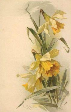 Vintage Daffodils Postcard ~ Catherine Klein