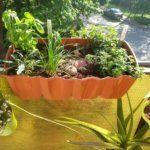 Ismét indul a pet palackos paradicsom szezon! | Nagybetűs Élet Plants, Plant, Planets
