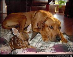 lustiges Bild 'Bambi.jpg'