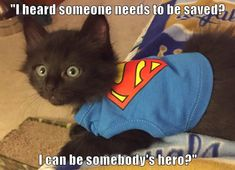 You Can Be MY Hero Anytime! Funny Animal Pictures, Cute Funny Animals, Funny Cute, Cute Cats, Animal Pics, Silly Cats, Crazy Cats, Funny Kitties, Kittens And Puppies