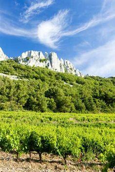 Gigondas-Vignes sous les Dentelles de Montmirail.