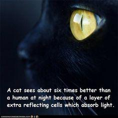 Fun Cat Facts #43