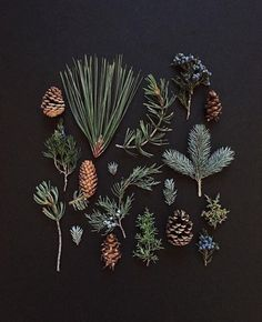 Pretty wintry things by Ja Soon Kim Botanical Art, Botanical Illustration, Foto Macro, Nature Collection, Christmas Mood, Yule, Pine Cones, Land Scape, Evergreen