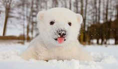 Great Photo Gallery---> Animals Playing in the Snow for the First Time