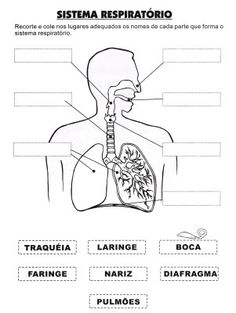 sistema respiratório Science Worksheets, Science Activities, Human Body Activities, 6th Grade Science, Human Anatomy And Physiology, Nursing Notes, Respiratory System, Body Systems, Teaching Spanish