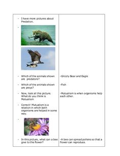 A Detailed Lesson Plan in Science in Grade IV I. enumerate the five ecological relationshi… 4a's Lesson Plan, Lesson Plan Format, Lesson Plan Examples, Science Lesson Plans, Kindergarten Lesson Plans, Science Lessons, Teaching 5th Grade, 5th Grade Reading, Outdoor Survival