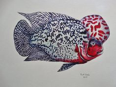 Flowerhorn Cichlid original painting by Goohsnest on Etsy. These are very unusual aquarium fish and this painting would make a great gift for someone that specializes in Flowerhorns.