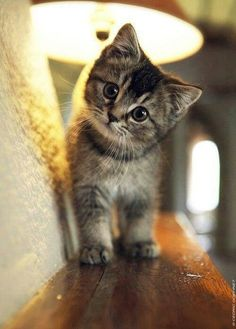 Adorable kitten!