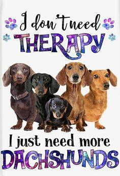 Dachshund Quotes, Mini Dachshund, Daschund, Dachshund Puppies, Wiener Dogs, Dachshunds, Doggies, Dog Nutrition, Dog Training Tips