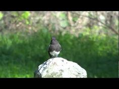 Slow motion bird landing and taking off - YouTube