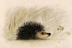 Inquisitive Hedgehog Hedgehog Drawing, Hedgehog Pet, Hedgehog Illustration, Watercolor Illustration, Inspiration Artistique, Spirited Art, Cute Monsters, Realistic Drawings, Button Art