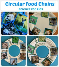 A great science activity for children made using paper plates and images from Twinkl Resources 1st Grade Science, Science Fair, Science For Kids, Science And Nature, Earth Science, Science Penguin, Plant Science, Life Science, Food Chain Activities