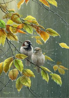 Galleries | Jeremy Paul - Wildlife Artist: