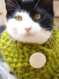 Cat Small Dog Cowl Scarf - SIZE SMALL - Custom colors - Cat Clothing Cat Accessories Cat Apparel Small Dogs