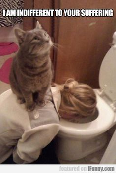 This is just one more reason cats are evil.