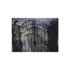 Reality Escapes Her... ❤ liked on Polyvore featuring backgrounds, pictures, alice in wonderland, photos, pics, fillers, quotes, text, phrase and saying