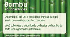 O bambu foi tão útil à sociedade chinesa que até serviu de metáfora para boa conduta. Você sabia que a quantidade de hastes do bambu da sorte tem significados diferentes? 2 hastes amor e sorte em dobro; 3 hastes – fu (felicidade), Soh (vida longa), Lu (prosperidade). Veja o significado de outras quantidades. - See more at: http://acaciagardencenter.com.br/blog/#sthash.fwR18iH6.dpuf