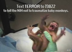 National Institutes of Health (NIH) experimenters are terrorizing INFANT MONKEYS they INTENTIONALLY made mentally ill: http://on.fb.me/1o1j4HO