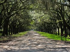 Possibly one of the prettiest drives in the US? At Wormsloe Plantation in Savannah, GA.