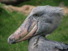 The World's Ugliest Animals