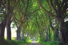The Dark Hedges, Stranocum, County Antrim