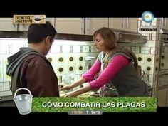Cómo combatir plagas (capítulo 6) - YouTube COCINEROS ARGENTINOS