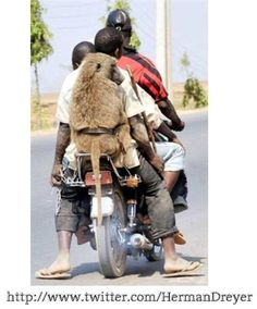 Baboon on bike for a free ride baboons love attention like riding on bikes