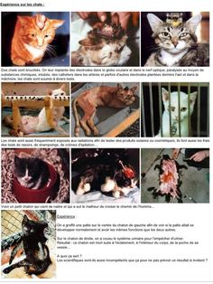 #BanVivisection - Twitter Photos Search