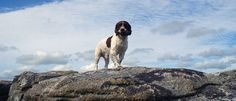 Pet friendly holiday cottages   Bodmin Moor, Cornwall   Darrynane Cottages