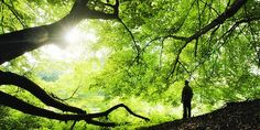 Mi Universar: La vida se debe honrar