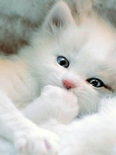 beautiful white cat in snow hXqSsfnO