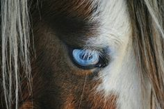 Blue Eye...