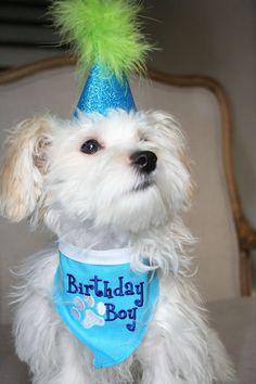 Dog Puppy Birthday Bandana- Blue
