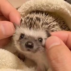 Cute animal pictures: 150 of the cutest animals! Baby Animals Pictures, Cute Animal Pictures, Animals And Pets, Happy Animals, Cute Little Animals, Cute Funny Animals, Cute Cats, Funny Dogs, Funny Ferrets