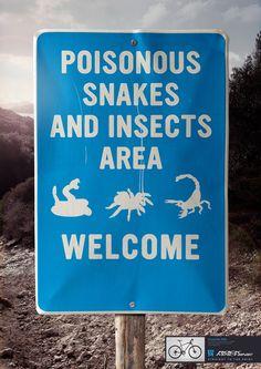 serpientes rockmachine