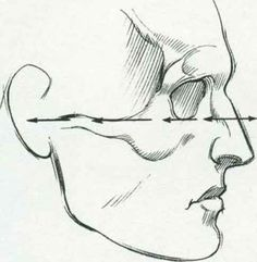 Cheekbone Drawing Side View - CHEEK BONE ARCH The side arch of the cheek bone…
