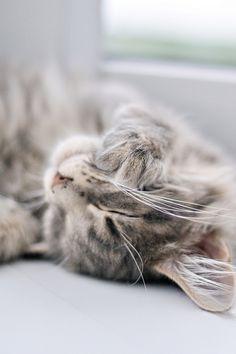 Kitten snuggles