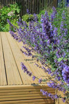 Stunning timber deck | #deck #decking #garden #timber #home #landscapedesign #gardenlife #landscaping #macro #photography