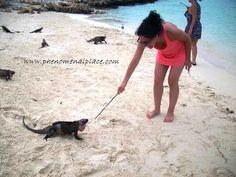 Have you ever fed iguanas?